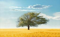 Bilder einer Landschaft