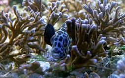 Dynamit-Fischen im Korallenriff