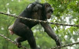 Verrückte Tierwelt: Beinahe Mensch