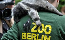 Zoobabies
