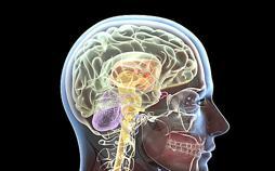 Immer vernetzt - Wenn das Gehirn überfordert ist