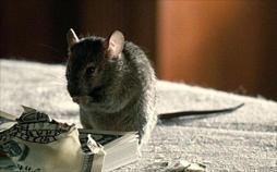 Spione im Tierreich