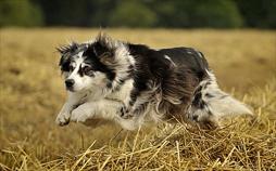 Dog, der Kopfgeldjäger