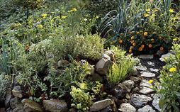 Mein leckerer Garten