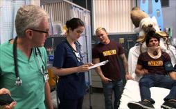 Verrücktes Krankenhaus - Unglaubliches aus der Notaufnahme