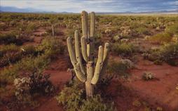 Faszinierende Erde: Wüsten