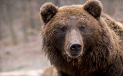 Hauptsache Bären!