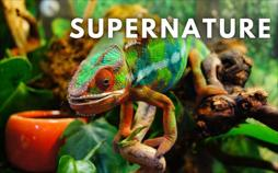 Superkräfte der Natur