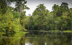 Der Wald in der Klimakrise