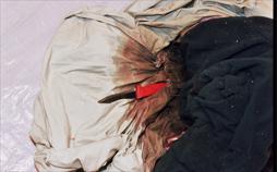 Auf Verbrecherjagd - Der Serienkiller Peter Tobin