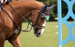 Pferdesport : Global Champions Tour
