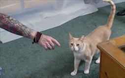 Der Katzenflüsterer
