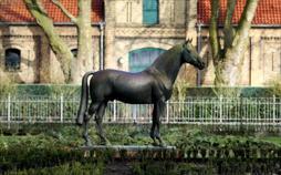 Weltklasse aus dem Münsterland - Die Pferdestadt Warendorf