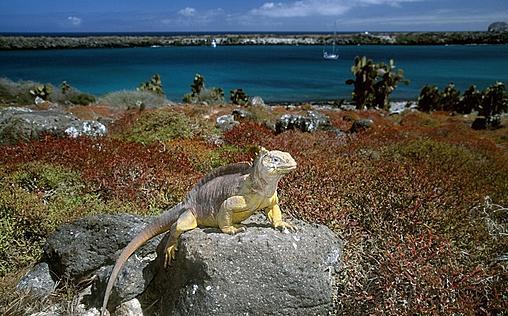 Wilde Inseln   Galapagos
