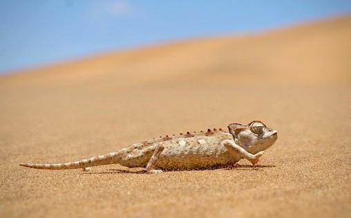 24 Stunden Wildnis   Jäger der Wüste